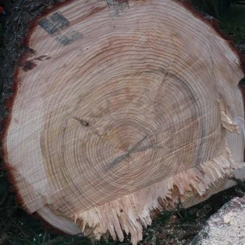 houtblok Groenland
